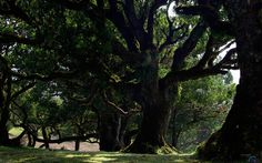 giant tree - Google Search