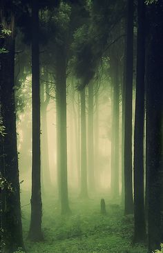 When the Ghost led Hamlet away from everyone else, he led Hamlet to a secluded forest so they could talk alone. This picture is how I imagine the forest to be like because it sets the same eerie mood like the scene in the play is. Foggy Forest, Misty Forest, Dark Forest, Night Forest, Magic Forest, Parcs, Fantasy Landscape, Mists, Nature Photography
