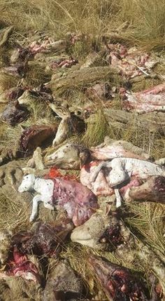 SA farm murders grow more sadistic Even the farmers animals are not spared Black on White Genocide in South Africa News South Africa, Tiger Tank, America And Canada, Freedom Of Speech, Farmers, Horror, Animals, Life, Black