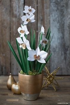 Paper_Cymbidium_Orchid_Plant