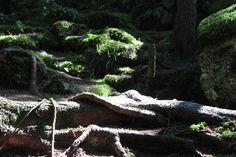 Green Heaven with tree moss #greenheaven #innature