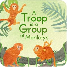 """A Troop is a Group of Monkeys"" is an interactive book for kids that introduces some of the fun plural nouns for animal groups (like ""a pride of lions"") in a musical, rhyming story. Written by Julie Hedlund and illustrated by Pamela Baron, the app features original music by Tim McCanna, whose ditty you won't be able to stop humming until long after the book is closed."