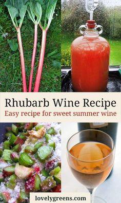 Rhubarb Wine Recipe -- easy to follow recipe for making sweet summer wine