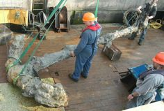 Salvaged anchor of Henry VIII's warship Mary Rose.