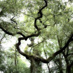 Trees by Jürgen Heckel, via Behance