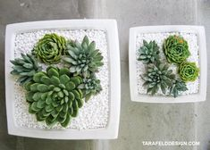 Succulents are gorgeous sculptural plants, they're easy to care for, and they last – which makes them perfect candidates for your holiday centerpiece this year. I would love these centerpieces year 'round and you'll notice that many of them came from wedding sites. People planning their weddings really put a lot of thought into the …