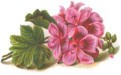 Lilac & Lavender: Rodzina