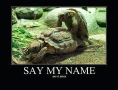 say my name funny tutles