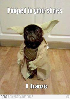 Yoda dog forgiven always is.