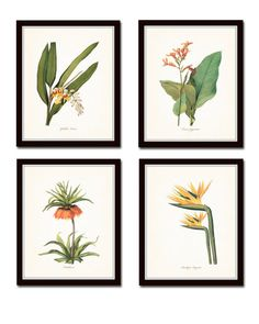 Tropical Botanicals Set No. 5 - Fine Art Giclee Prints This set features 4 antique botanical prints by the renowned Pierre Redoute. Each illustration has been digitally enhanced and restored to bring out the depth of color and detail then added to a light neutral background. The set includes a Canna, Bird of Paradise, Fritillaria and Globba Nutens with their botanical names in a classic script font below each flower. ***Frames are for display purposes and are not included. SIZES ---------...