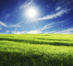 SongClan: Sunning Field