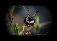 butterfly Naturally Beautiful, Butterfly, Nature, Photography, Animals, Design, Naturaleza, Photograph, Animales