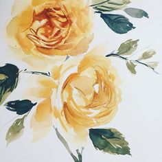 Painting yellow roses from my garden #winsorandnewton #watercolorflowers #roses #watercolour #flowers #painting Yellow Carnations, Yellow Roses, Pansies, Daffodils, Tulips, Paint Flowers, Art Diary, Watercolour Flowers, Water Lilies