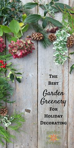 Holiday greenery is