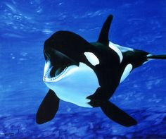 Orca, second only to humans in brain size, displaying complex rituals and spontaneous exhibits of pure joy.