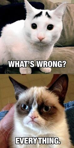 Grumpy Cat ...For the best memes and fuuny pictures visit www.bestfunnyjokes4u.com/rofl-best-funny-joke-pic/