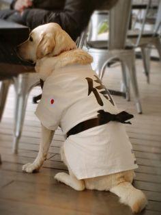 samurai dog!