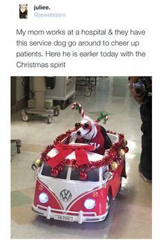 Awesome Christmas Service Dog!