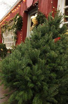 Christmas in Virginia