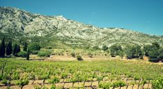 Wine-Passport-France-Provence-vins-dégustation-wine-tour-oenologie-week-end-vignes