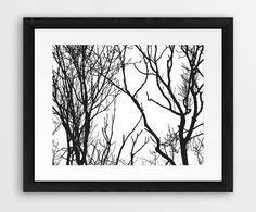 Tree Printable File Trees Silhouette Black White  Modern
