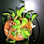 Fine dining in Cambridge Fine Dining, Cambridge, Plants, Instagram, Plant, Planets
