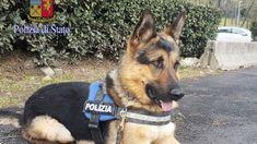 Roma Ares da vagabondo senza casa a cane poliziotto #lavoratori #salari #tasse #roma #stipendo #INPS