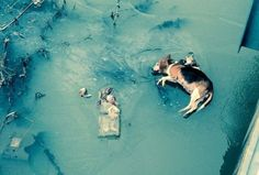 Animals Dumped on Frozen New Madrid County Creek! Demand Punishment For The Culprits! | PetitionHub.org