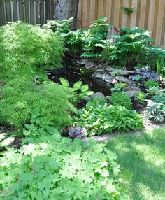 Three Dogs in a Garden: A Shade Garden in Oakville, Ontario Japanese Painted Fern, Hydrangea Quercifolia, Rustic Gardens, Cottage Gardens, Oakville Ontario, Back Gardens, Water Gardens, Shade Garden, Garden Plants