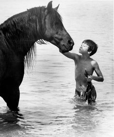 Cass Ole, the black arabian stallion who starred in the movie version of Walter Farley's The Black Stallion.