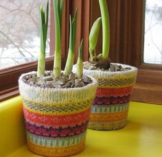 Una forma sencilla y llamativa para decorar tus macetas comunes y sin vida.