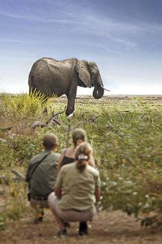 African Cape and Safari Honeymoon - Click the image for more info Out Of Africa, African Safari, Big Game, My Dream, South Africa, To Go, Wildlife, Elephant, Honeymoon Ideas