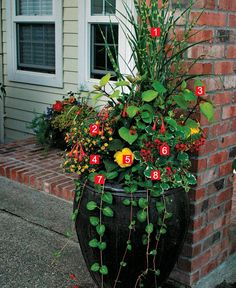 Stylish Shady Containers ~ many different types of container gardens, listing plants & their zones ~ almost all will grow in USDAz9, many in 10, even some in 11
