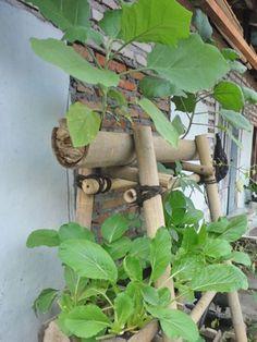 Menanam sendiri sayuran di teras bisa jadi rutinitas berkebun yang menyenangkan…