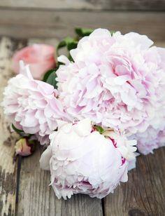 Pioneer - 19 facts Everyone who loves the pioneer should know - Beautiful home Pink Skull, Flower Quotes, Frame It, Spring Time, Flower Power, Peonies, Beautiful Flowers, Beautiful Homes, Centerpieces