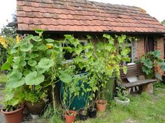 Selbstversorger-Garten: Selbstversorgergarten - interessanter Artikel
