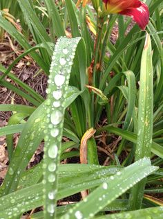 Water droplets in our front yard. A picture by Bethany O.