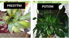 Zomiera vám pred očami vaša rastlinka? Zalejte ju touto zázračnou zmesou a konečne vám zase ožije | Báječné Ženy