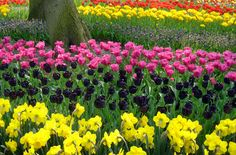 Floriade in the Netherlands