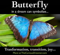 The Curious Dreamer's Dream Dictionary: How to Interpret Dream Symbol Meaning for Personal Growth Butterfly Transformation, Dream Dictionary, Dream Symbols, Dream Meanings, Dream Interpretation, Symbols And Meanings, Spiritual Meaning, Vegetarian Meals, The Dreamers