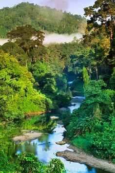 River in lowland rainforest, Danum Valley, Sabah, Borneo.