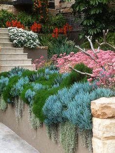 Succulent Landscaping, Succulent Gardening, Front Yard Landscaping, Succulents Garden, Australian Garden Design, Australian Native Garden, Back Gardens, Outdoor Gardens, Drought Tolerant Garden