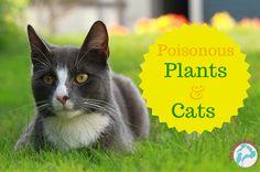 Poisonous Plants  Ctas