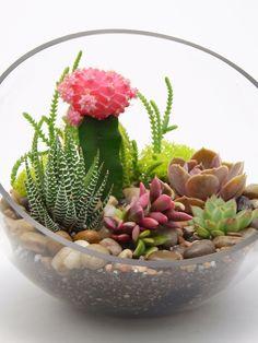 Amazon.com: Half Moon Terrarium Kit with Pink Moon Cactus, Echeveria Perle VonNurnberg, Haworthia Fasciata, Anacampseros Sunrise, Echeveria and Crassula Lycopodioides: Patio, Lawn & Garden