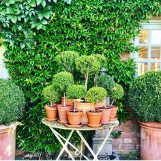 does it get more perfect than the garden of ? I think not 🍃 Happy Sunday Topiary Garden, Boxwood Topiary, Topiary Trees, Garden Pots, Potted Garden, Topiaries, Back Gardens, Small Gardens, Outdoor Gardens