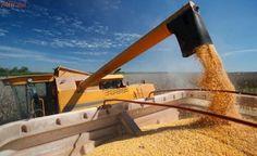 Top 10 maiores exportadores de milho do mundo