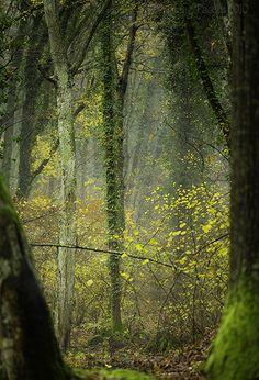 Uno scorcio del bosco del Sasseto.