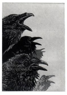 Raven artwork  Raven crow  Etching 5 inch x 7 inch by RAVENSTAMPS