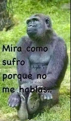 See the wonderful funny animal good night pictures - hilarious pets Spanish Jokes, Funny Spanish Memes, Funny Jokes, Hilarious, Mexicans Be Like, Mexican Problems, Mexican Memes, Humor Mexicano, Funny Phrases
