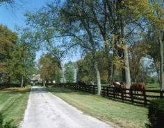Scenic horse farm in Kentucky.